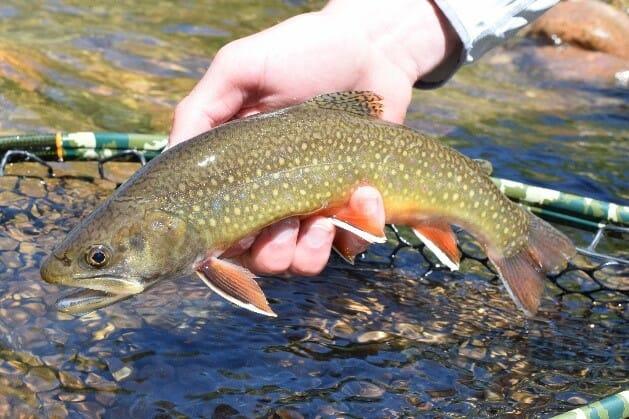 96f9f1e990c Quest for Kittatinny trout