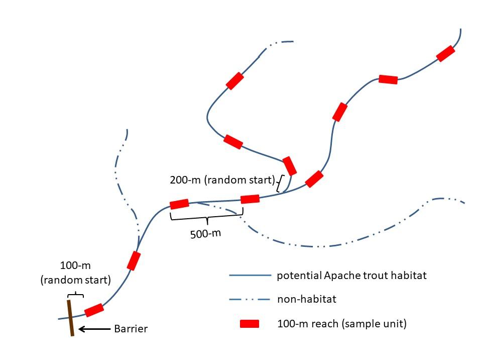Sampling design for an Apache Trout stream.