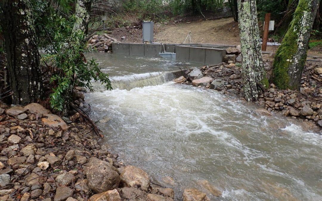 Bringing fish back to Yellowjacket Creek