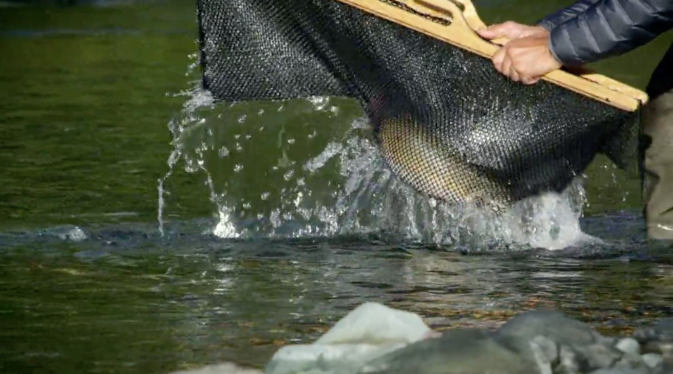 Backcountry bull trout featured in 'Secrets'