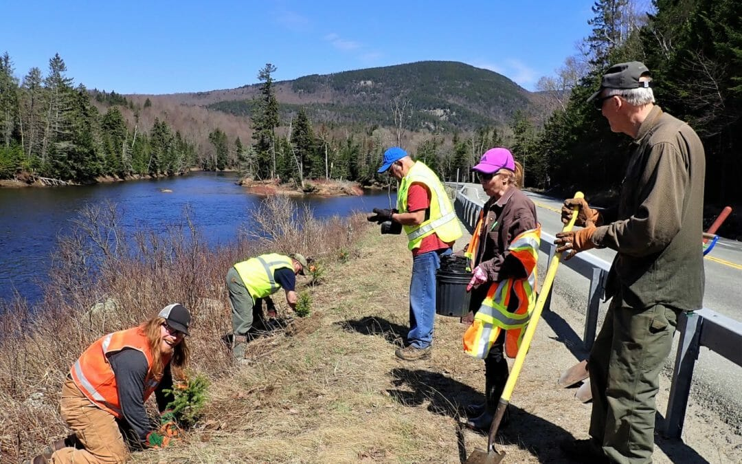 Double dose: Volunteers plant riparian edges of two New York trout streams