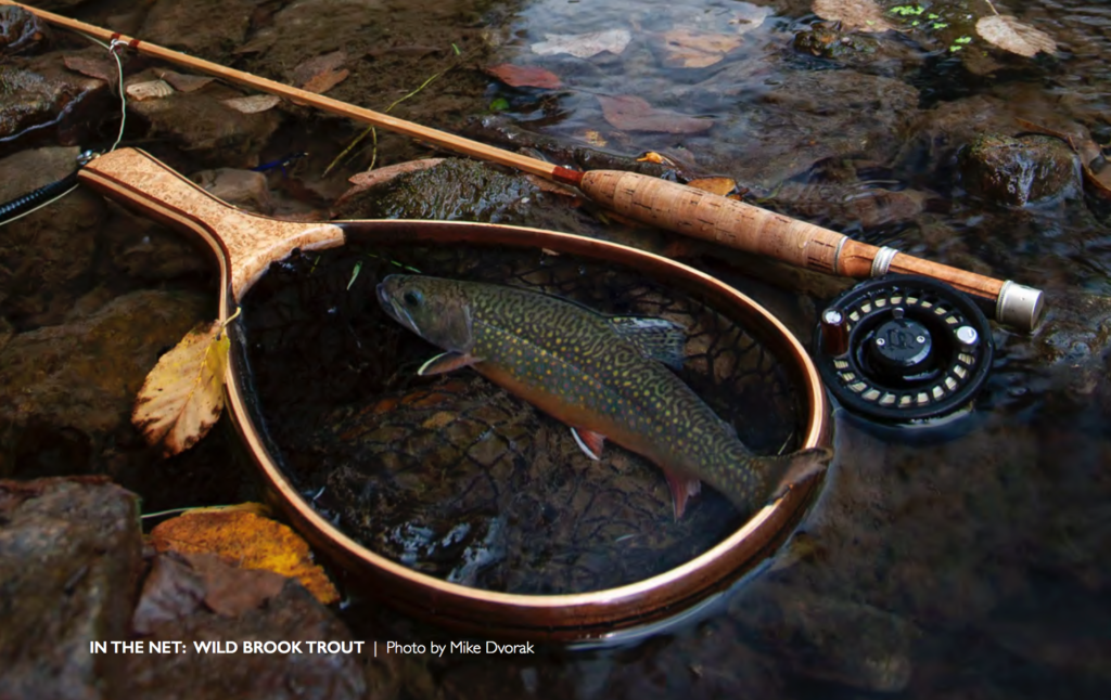 A native brook trout rests in the net in a Driftless Area stream.