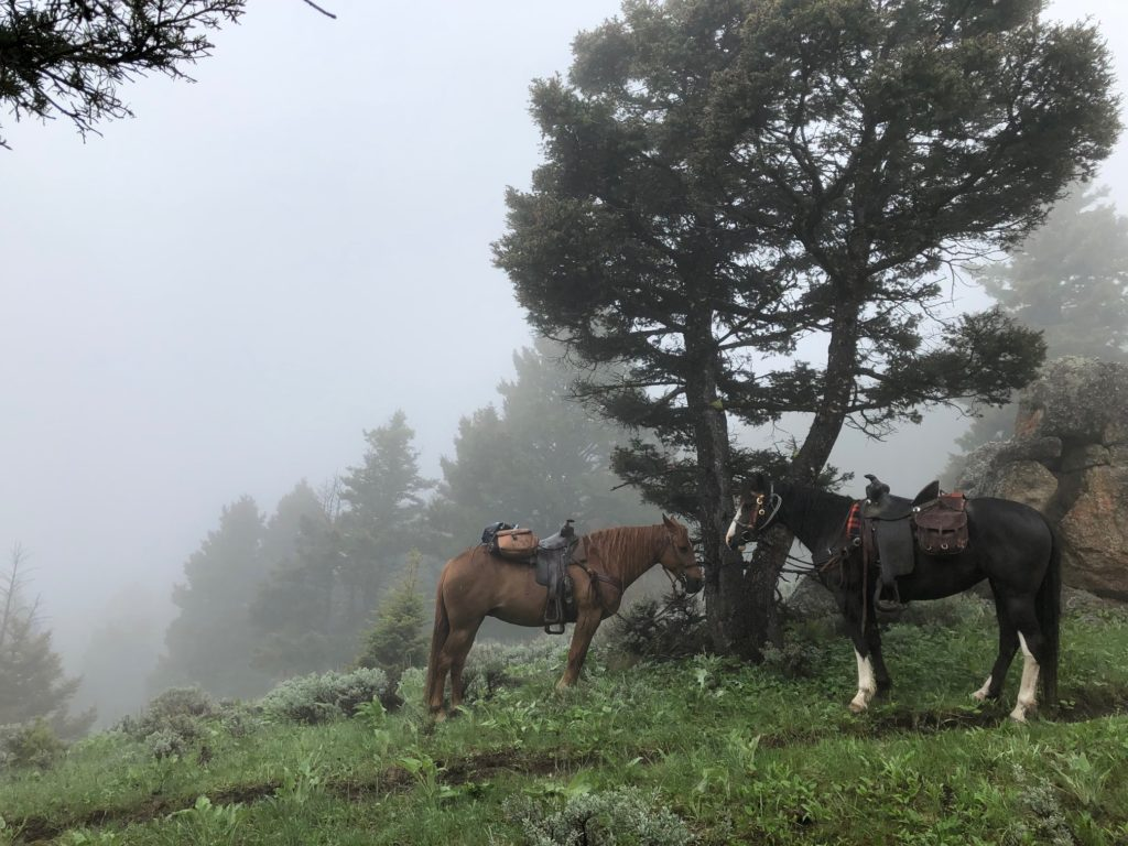 Two horses stand amid mountain fog in Montana.