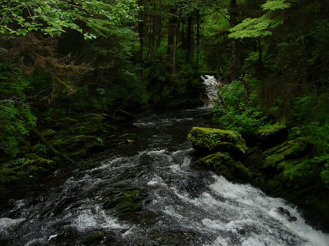 Leave Tongass trees be