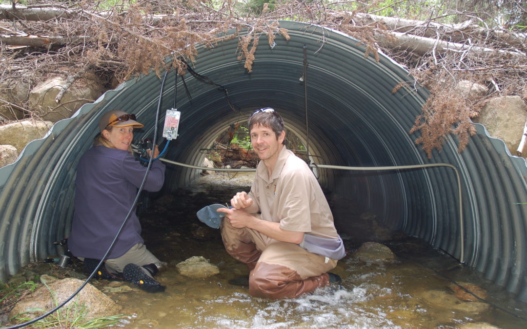 Monitoring fish movement is a vital conservation tool