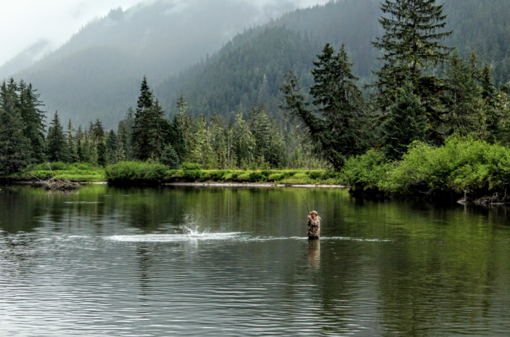 An angler hooks up with a pink salmon on the Tongass National Forest, Alaska.