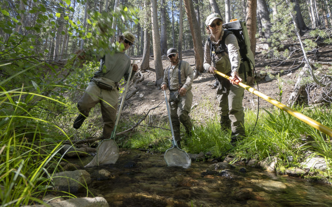 Lahontan cutthroat a poster child for modeling extinction risk