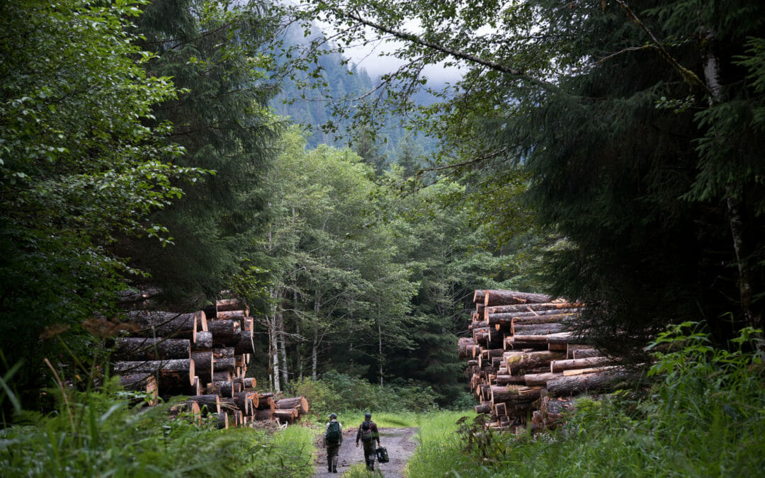 The Chugach National Forest caught up in roadless mess