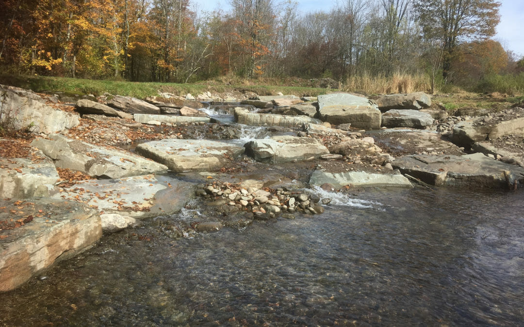 TU, partners aid brook trout with NY dam removal