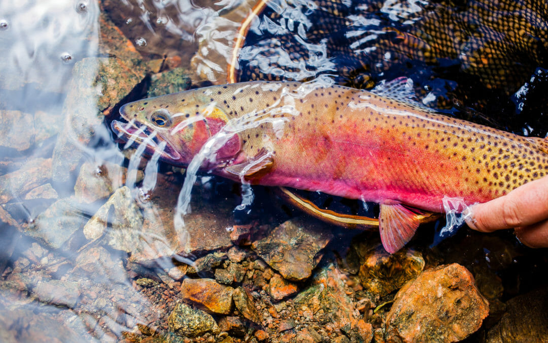 Drought and fishing in the Colorado River Basin