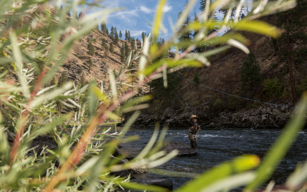 Brown Bag: Bringing Back salmon and steelhead on the lower Snake River