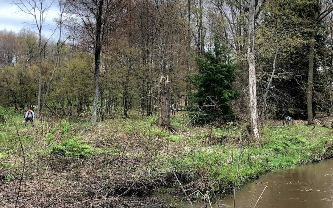 Trout and Trees: restoring Michigan's streambanks