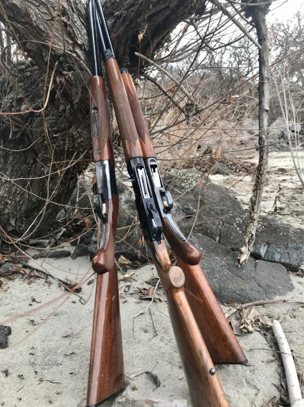 Three shotguns used for chukar hunting.
