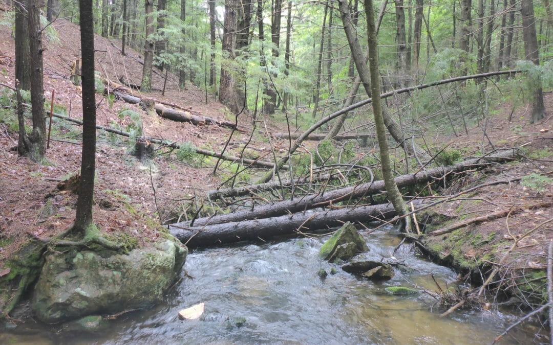 TU improving habitat in New Hampshire's Lakes Region