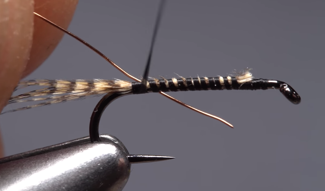 Phat and Phunky Pheasant Tail Nymph