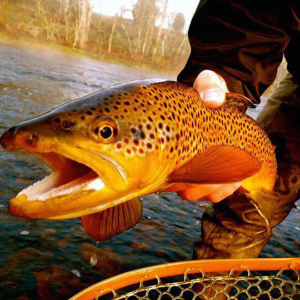 Spring Creek Trout Camp is a Pennsylvania legend