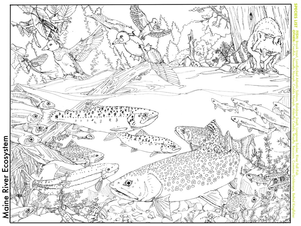 Adding Some Color To The Chaos Trout Unlimited
