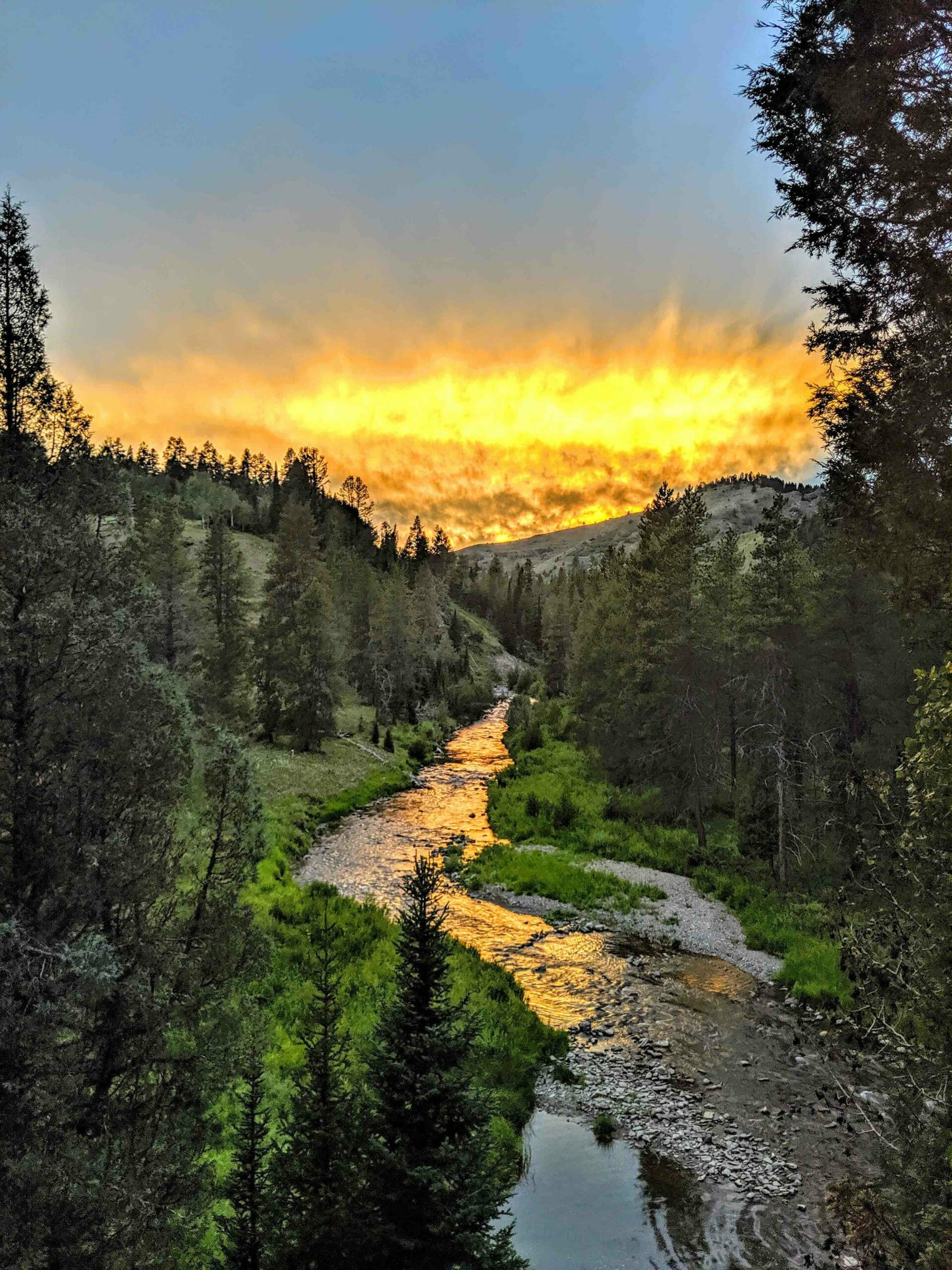 A trout stream running through a canyon at sunset.