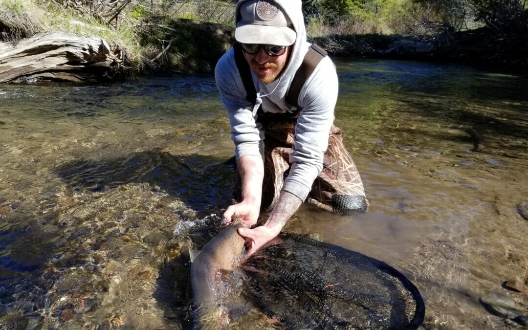 Hard work on Lahontan cutthroat trout threatened by hybridization