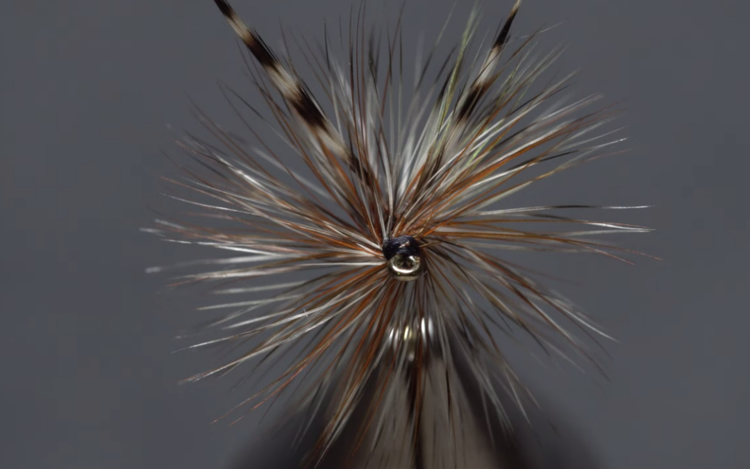 Brown and grizzly hackle mix