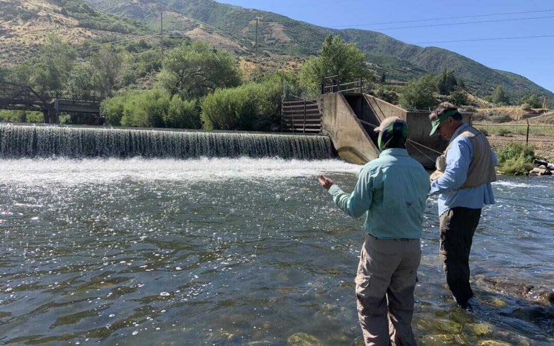 Barriers limit cutthroat trout migration