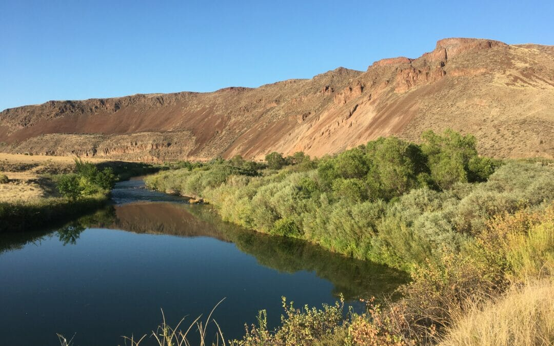 The desert browns of the Owyhee