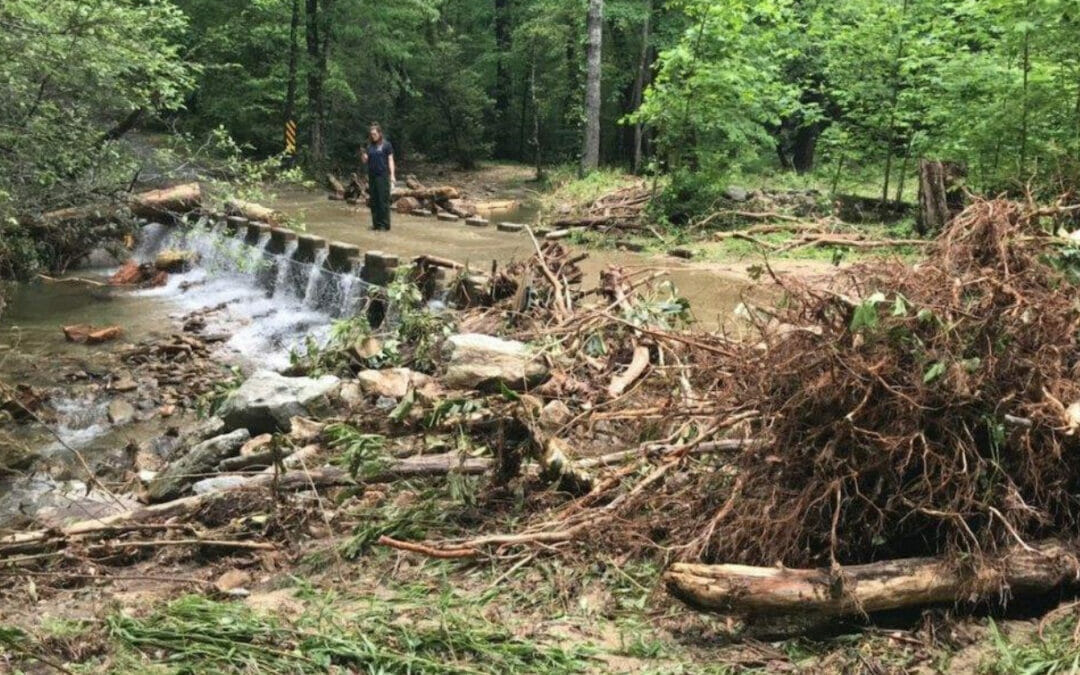 Trout Unlimited volunteers fan out to survey Wilson Creek in North Carolina