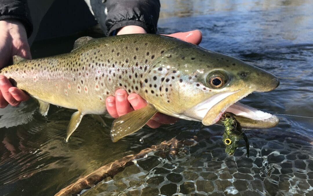 Fishing Big Sky Country with Garrett Munson from Montana Fishing Outfitters