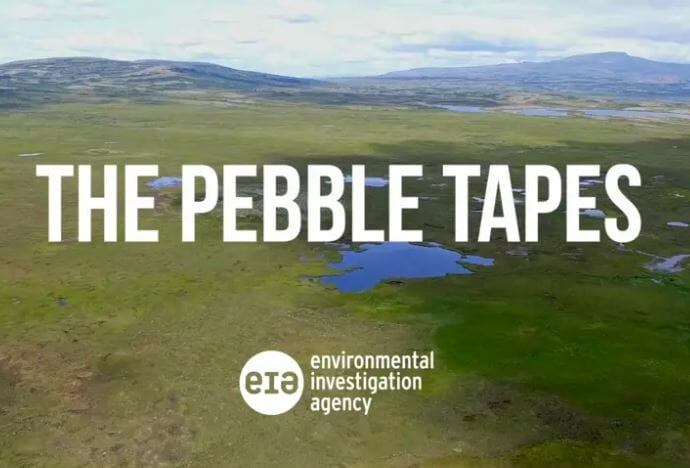 Pebble Tapes intensify call for permit denial