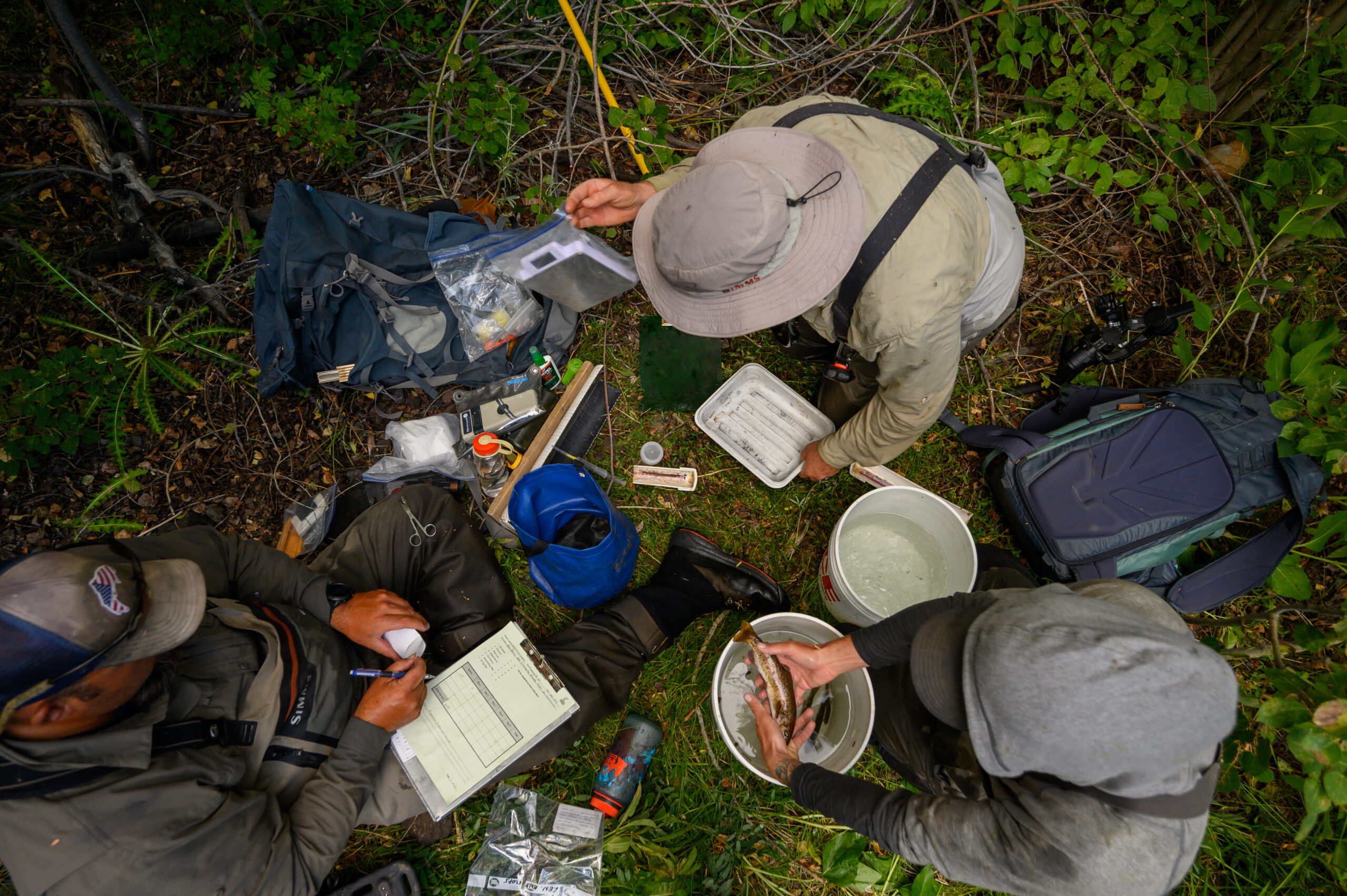 Unwrapping genetic gifts that tell meaningful stories of trout