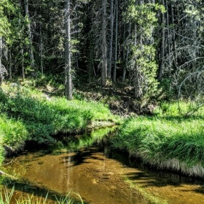 A small trout stream in Yellowstone National Park.