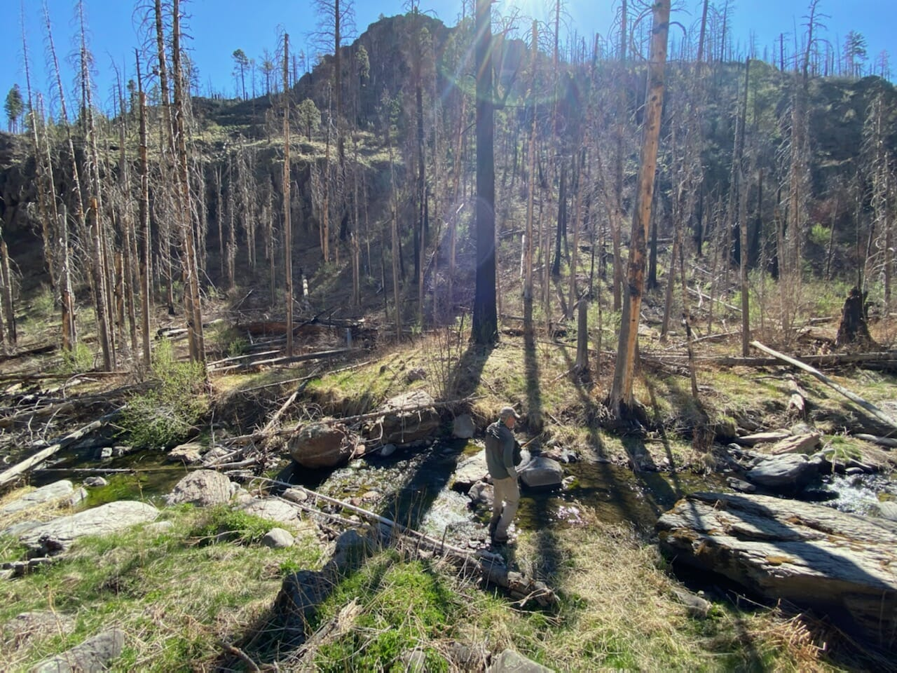 A conservationist takes in the burned landscape of Willow Creek in southern New Mexico.